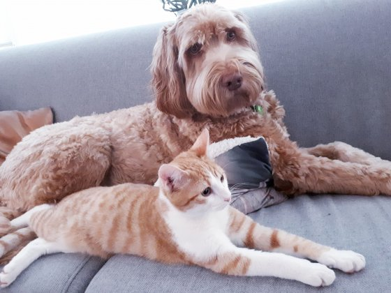 hond kat huisdier match samen