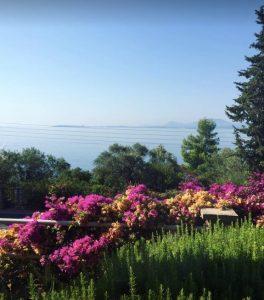 Corfu1 264x300 - Vakantie & Tripjes