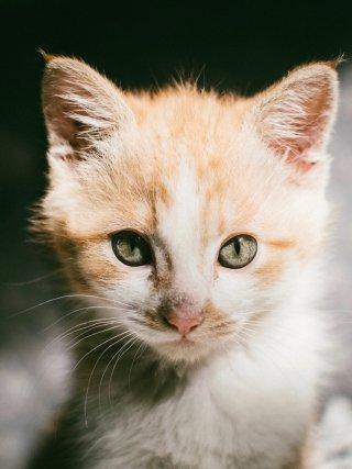 bingo-katten-kattenbingo-mispoes