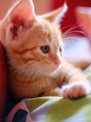kitten-kat-huis-thuis