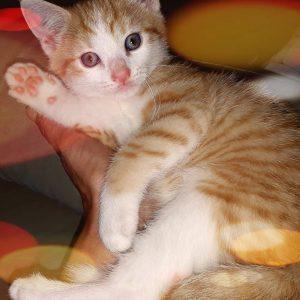 kitten 300x300 - Heb jij nu ook een kitten in huis?