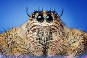 megaspin 300x200 - Spinnen....heb jij ook last van een spinnenfobie of angst?