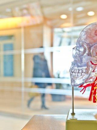 de rol van jouw hersenen in het beleven van pijn